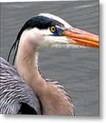 Great Blue Heron 5 Metal Print