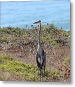 Great Blue Heron - 9 Metal Print