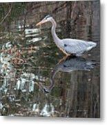 Great Blue Heron And Reflection IIi Metal Print