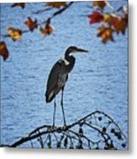 Great Blue Heron At Shores Of King's Mountain Point Metal Print