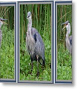Great Blue Heron Collage Metal Print