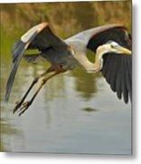 Great Blue Heron Flying Across Lake Metal Print