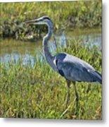 Great Blue Heron II Metal Print