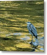 Great Blue Heron On A Golden River Metal Print