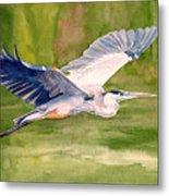 Great Blue Heron Metal Print by Pauline Ross