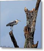 Great Blue Heron Perched Metal Print