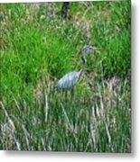 Great Blue Heron Series 1 Of 10 Metal Print