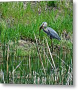 Great Blue Heron Series 5 Of 10 Metal Print