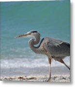 Great Blue Heron Strolling On The Beach Metal Print