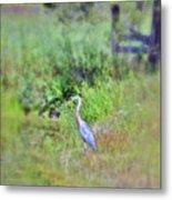 Great Blue Heron Visitor Metal Print