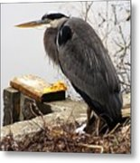Great Blue Heron Wildlife Bird Metal Print