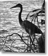 Great Blue In Black And White Metal Print
