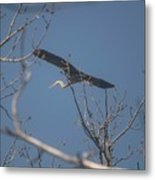 Great Blue In Flight Metal Print