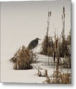 Great Blue In White Metal Print