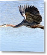 Great Blue Lift Off Series 4 Metal Print