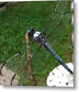 Great Blue Skimmer Metal Print