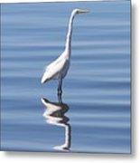 Great Egret - 2  Metal Print
