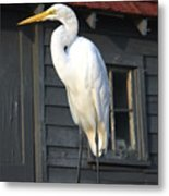 Great Egret 27 Metal Print