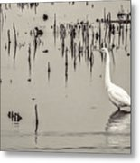 Great Egret At Horicon - B - W  Metal Print