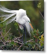 Great Egret Bridal Train Metal Print