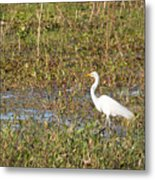 Great Egret Fishing Metal Print