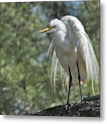 Great Egret II Metal Print