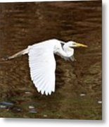 Great Egret In Flight Metal Print