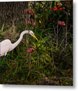 Great Egret In The Garden Metal Print
