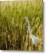 Great Egret In The Morning Dew Metal Print