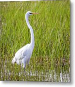 Great Egret In The Spring  Metal Print
