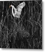 Great Egret Inthe Marsh Metal Print