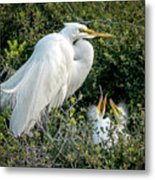 Great Egret Mom And Babies Metal Print