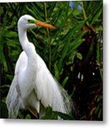 Great Egret Nesting Metal Print