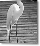 Great Egret On The Pier - Black And White Metal Print