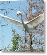Great Egret Over The Treetops Metal Print