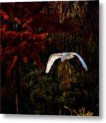 Great Egret Paradise Flight Metal Print