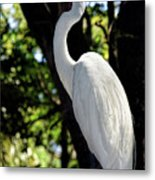 Great Egret Up Close Metal Print