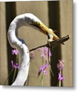 Great Egret With Lizard Who Is Holding Onto Wood Metal Print