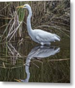Great Egret With Reflection Metal Print