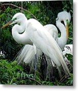 Great Egrets 10 Metal Print
