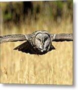 Great Gray Owl In Flight Metal Print
