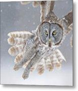 Great Grey Owl In Snowstorm Metal Print