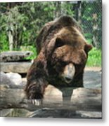 Great Grizzly's Metal Print