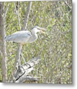 Great Heron With Mouth Open Metal Print
