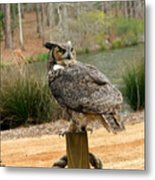 Great Horned Owl 1 Metal Print