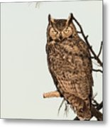 Great Horned Owl At Dusk Metal Print