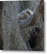 Great Horned Owl Fledgling Metal Print