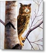 Great Horned Owl In Birch Metal Print
