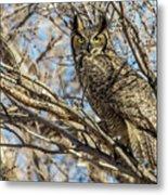 Great Horned Owl In Cottonwood Tree Metal Print