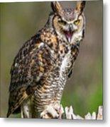 Great Horned Owl Screeching Metal Print
